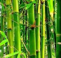 Бамбуковые ковры инновации в интерьере